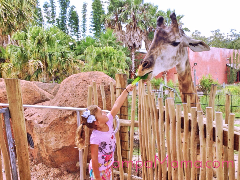 Free Tampa Lowry Park Zoo Admission for Active Military in August